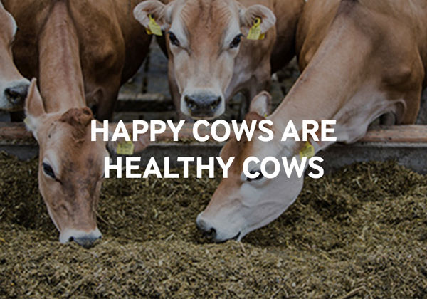 A happy cow produces more and better quality milk.